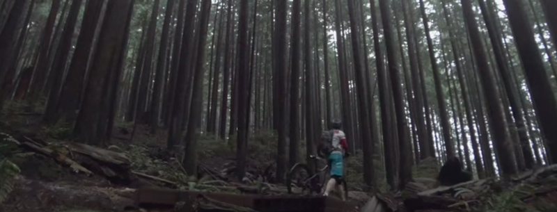 A cyclist in a rainforest: part of the choose to move campaign