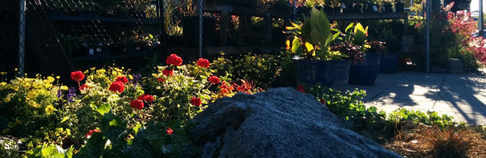 Flowers and gardens in Oak Bay