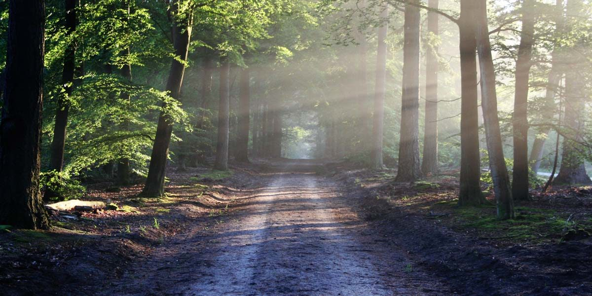 A path through the woods with light streaming down