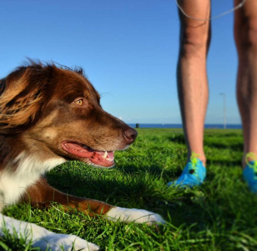 A brown and white dog's head and front paws are at the forefront and to the left and a woman's legs are in the back in blue runners. They are on green grass with a bright blue sky. The photo was taken at Dallas road in Victoria.
