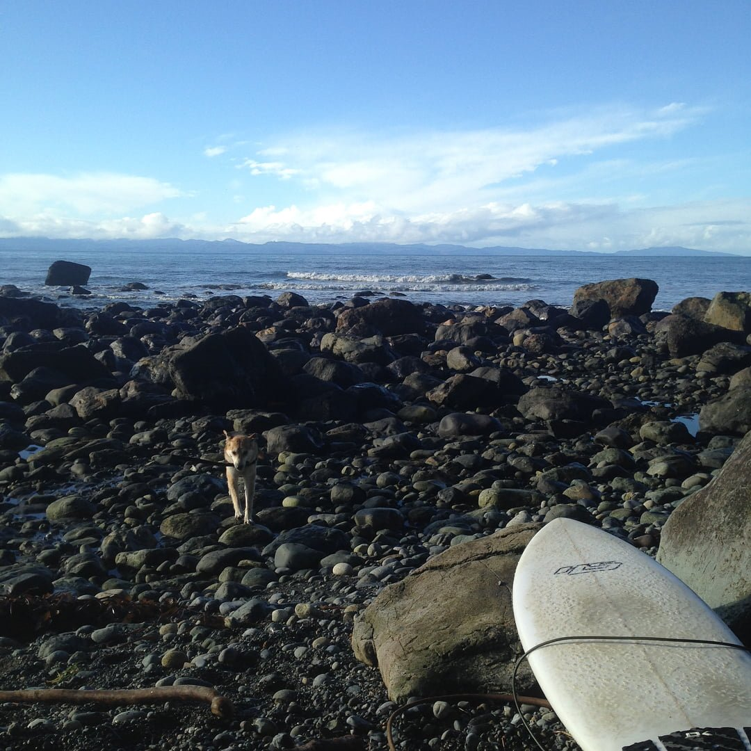 This is a beach view with a small white dog running towards the camera and a surfboard lying in the front to the right.