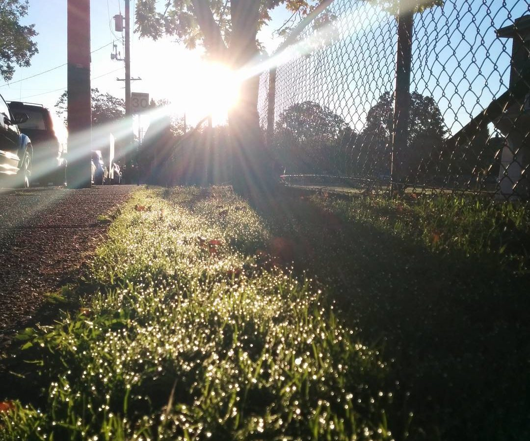 Dewey grass below a chain link fence, with a bright solar flare shining in the middle of the photo.