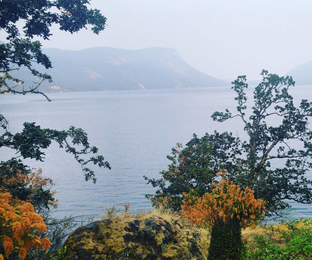 A foggy summer day, with a view through some trees over the water of Maple Bay, and a large island across the water.
