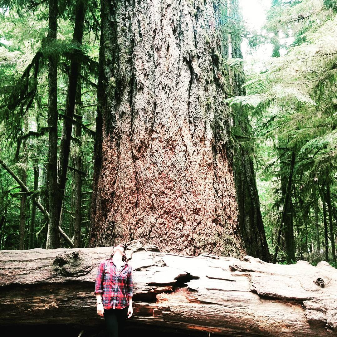 Kristen stands looking straight upwards in front of the base of a giant Douglas Fir tree, with bright light coming through the foliage behind her. There is a fallen tree as tall as Kristen between her and the standing Douglas Fir.
