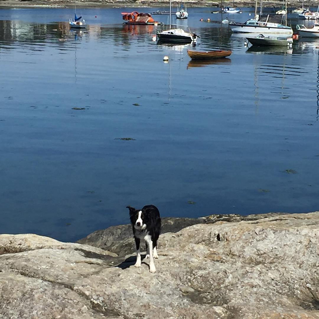 A border collie dog stares at the camera, while standing on a rocky outcrop next to blue water, with boats floating in the background.
