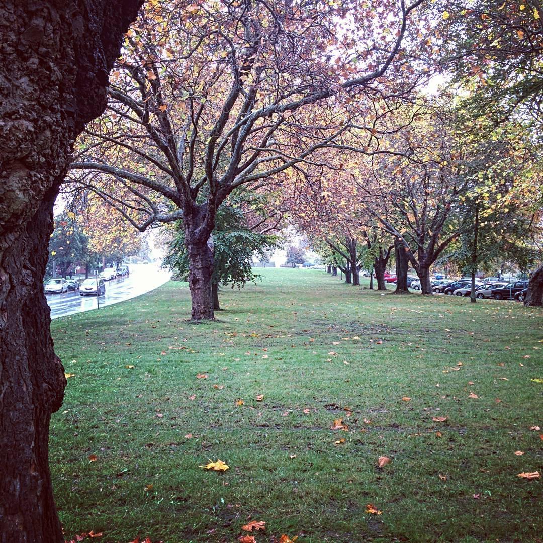Snapshot: Autumn in Victoria