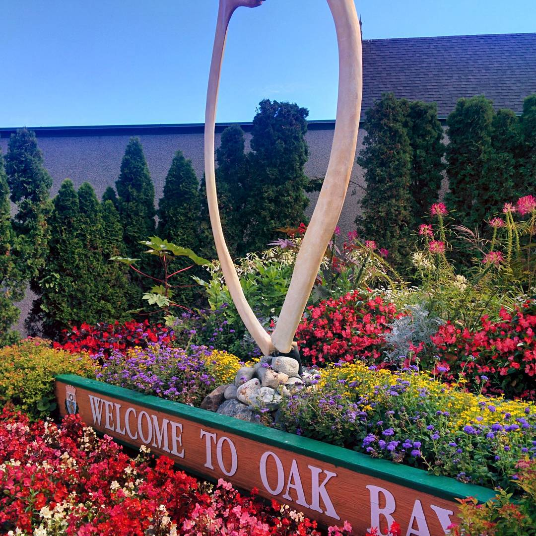 "A sign saying ""Welcome to Oak Bay"" is underneath who whale bones arranged like a wishbone with the wide end at the top. This is all surrounded by beautiful flowers. which are fully in bloom."