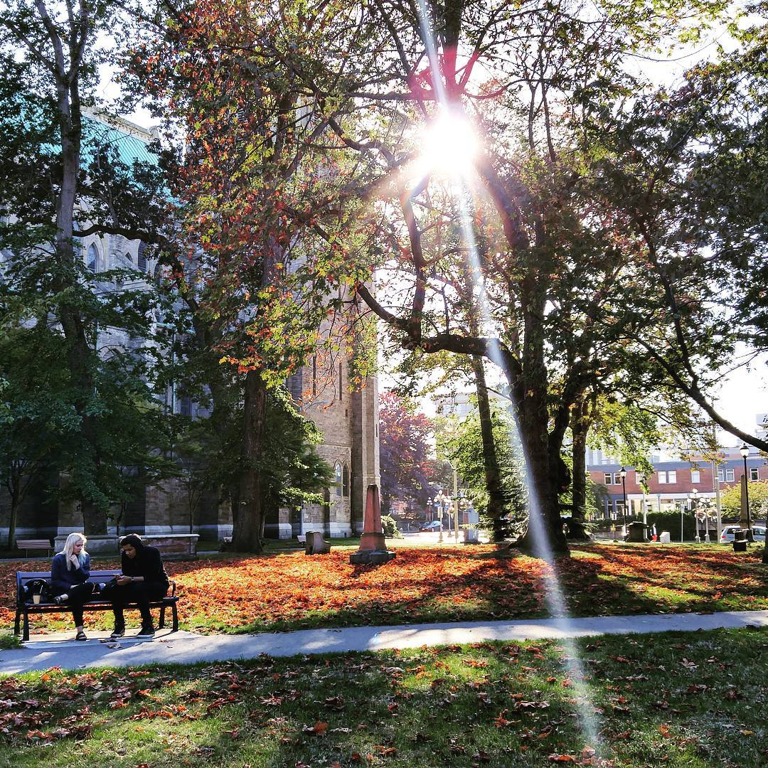 The cemetery beside Christ Church Cathedral in Autumn with orange and red and brown leaves all over the grass, and a paved pathway cutting through the lower middle of the photo. Two women are sitting on a bench on the far side of the path to the left. One has white hair and the other has black hair. The sun is shining through a large maple tree. The cathedral wall is visible slightly through the trees as well.
