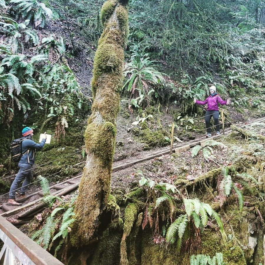 Two women standing on a staircase on a path in the woods. The woman at the bottom of the stair case is taking a photo of the woman part way up. The former in a black coat and the latter in a purple coat. There are ferns covering the steep hill beside the staircase and a moss covered tree in the foreground.
