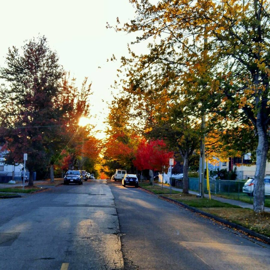 A view looking down a residential street early in the morning. The sun is still rising so shining through the autumn coloured leaves on the trees that line the street. There is no one visibly out and about in the photo. The sky looks sunny and clear.