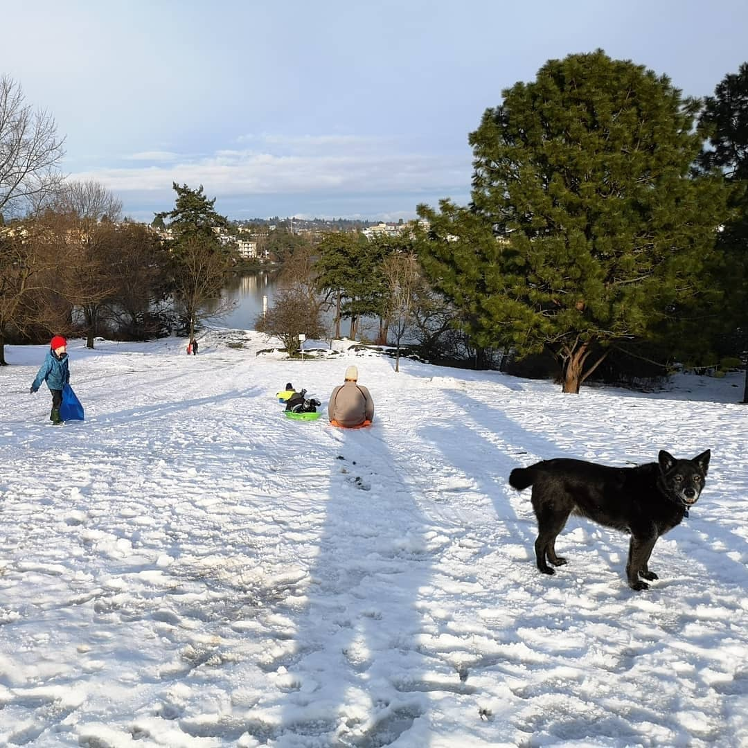 People sled down and walk up the hill in Vicwest, while a happy family dog watches on.