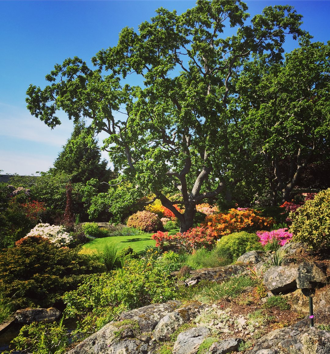 A beautiful sunny garden with rock, and orange, pink and yellow flowers, and green leafy trees. The sky is bright blue and clear.