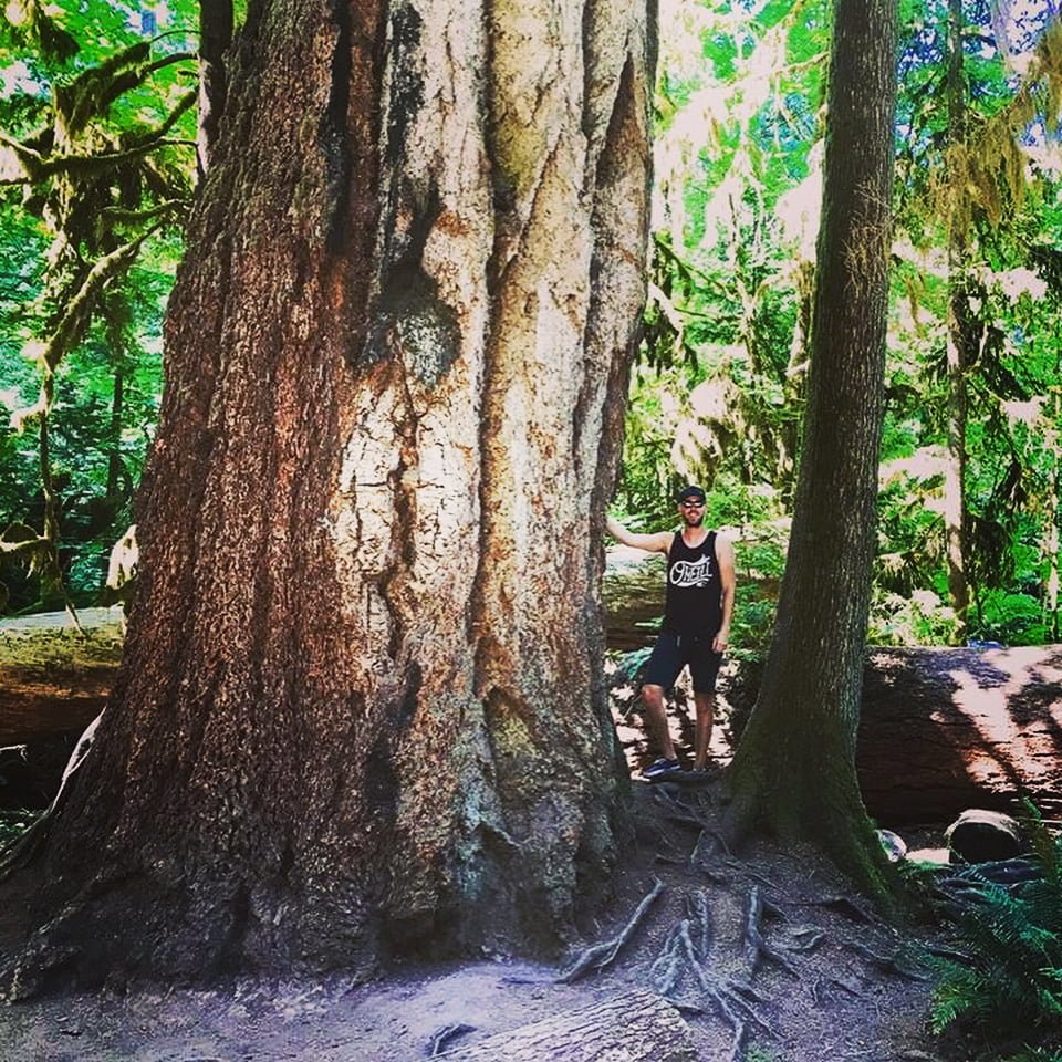 Explore BC: Cathedral Grove
