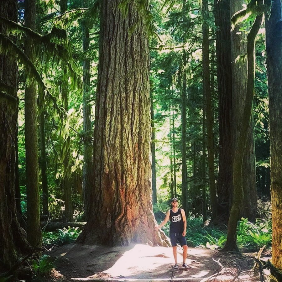 A man in a black tank and shorts standing in a patch of sun beside a large evergreen tree trunk. It is too tall to see the branches of the tree in the photo. There are other tall mossy evergreens all around him.