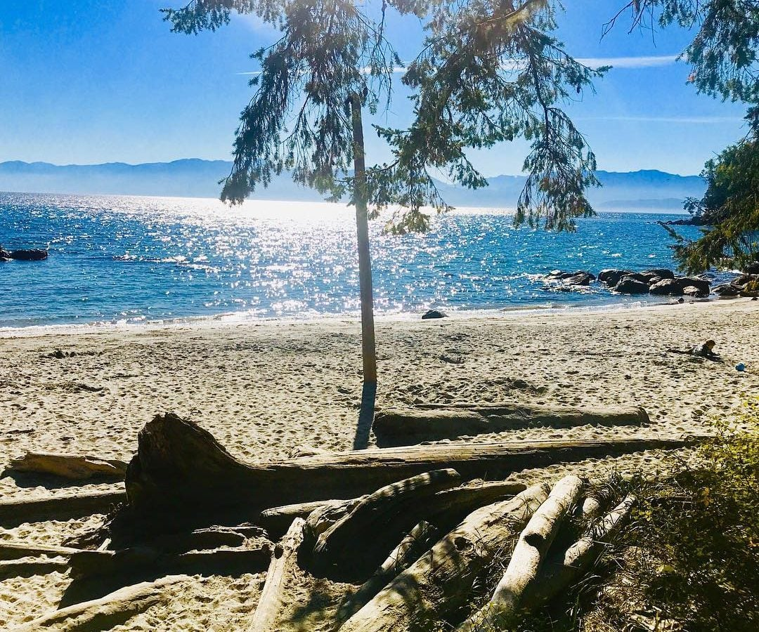 A sandy beach with drift wood under a pine tree to the right and a blue ocean to the left. The sun is reflecting in the water and the sky is blue.