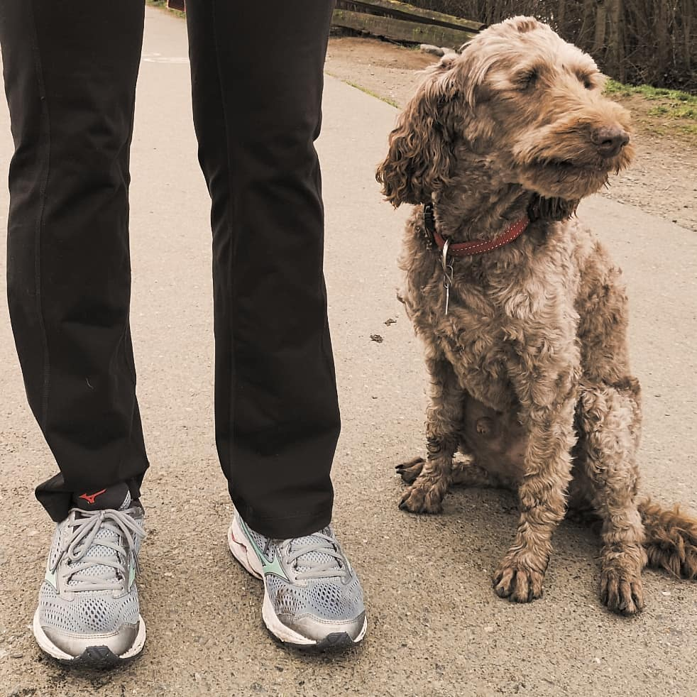 A white medium size dog with curly fur sits to the right, and next to the dog on the left is a person's legs. The person is wearing black trousers and light grey runners.