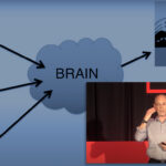 A TED talk speaker stands in a bubble in front of his wonky diagram illustrating the brains role maintaining balance.